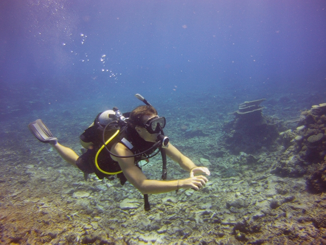 A diver cruises through the pristine waters of the Great Barrier Reef with Adrenalin Dive
