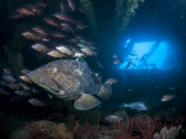 Diving the Yongala shipwreck abundant with marine creatures of all shapes and sizes