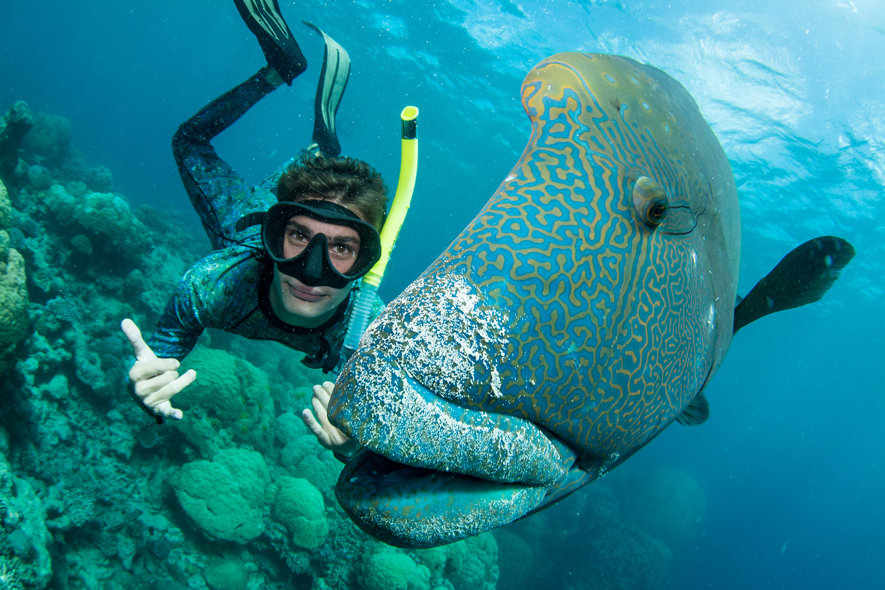 Wally is a Alpha-male Alphamale Humphead Napoleon Wrasse.   Most dive sites have one of this specimen and they are collectively called Wally.  They are very curious and often interact with divers.